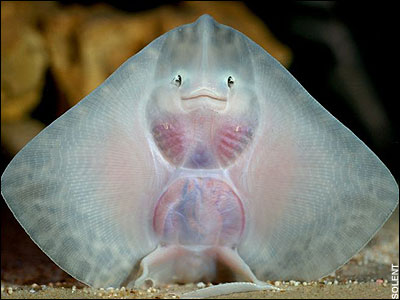 baby ray is smiling at you!